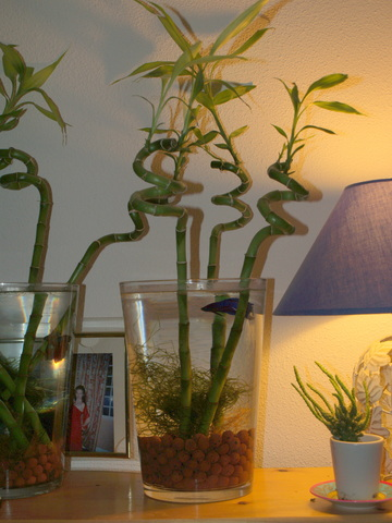 lit a eau avec poisson - Lit A Eau Avec Poisson